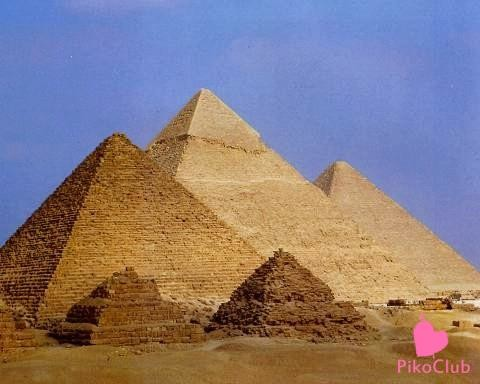 вяз.Египет